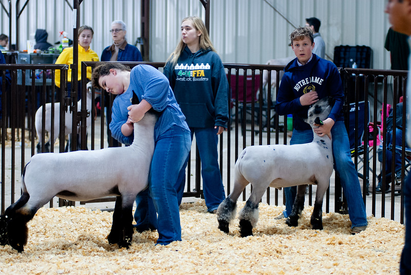 kay_county_showdown_sheep_20191207-83.jpg