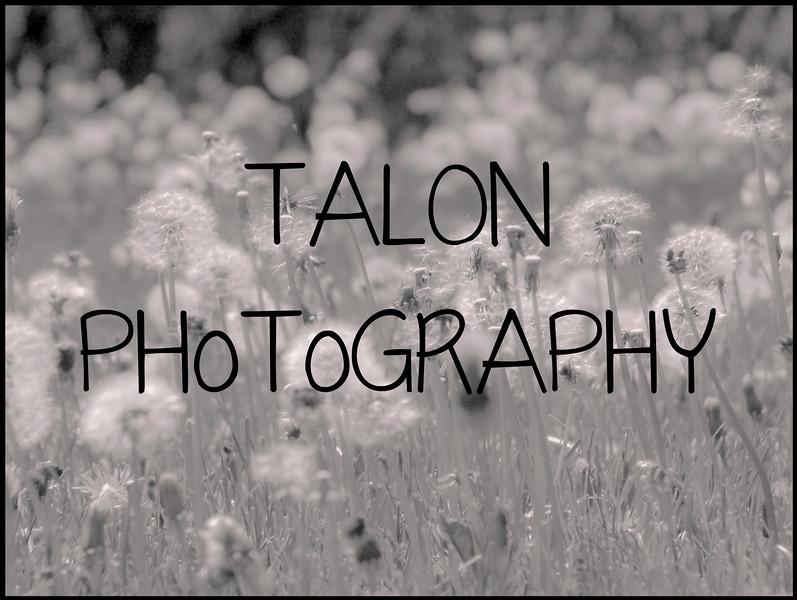 TP dandelion.jpg