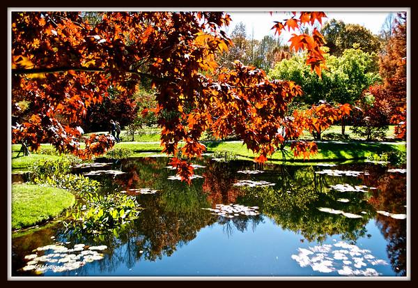 Gibbs Gardens Fall 2014