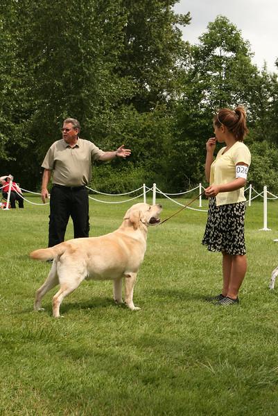 Multiple Breeds at the Hazelmere Dog Show June 21-22, 2008