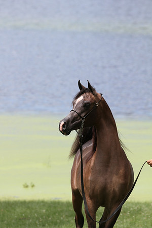 Bey Ambition Filly PROOFS