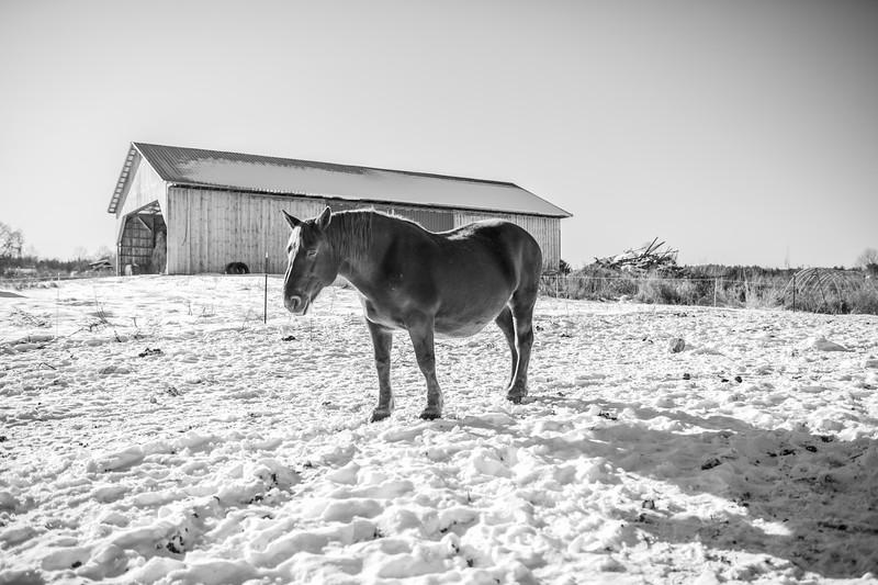 reberrockfarm.winter2019.bencarmichael (35 of 80).jpg