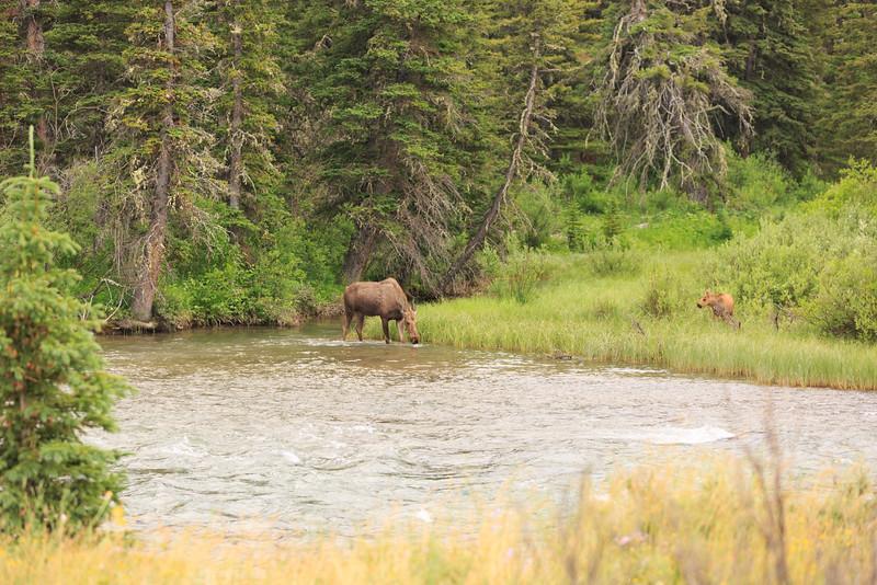 2014_07_14 Glacier National Park 209.jpg