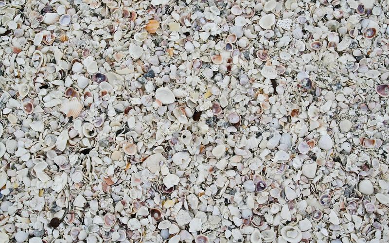 Shells, Lots Of