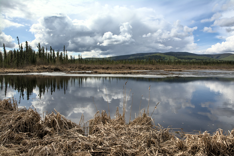 Peat Ponds
