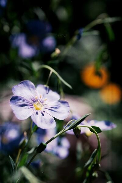 amh FLOWERS (1767).jpg