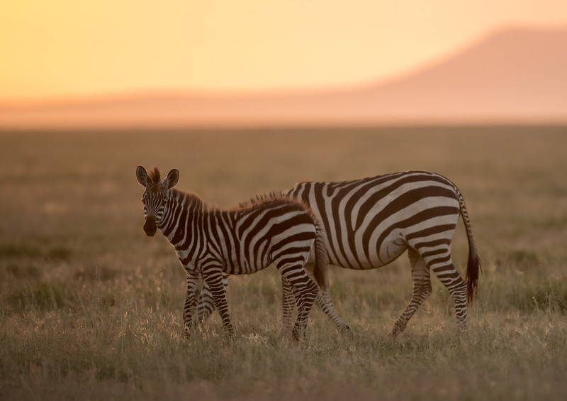 Tanzania_Feb_2018-787.jpg