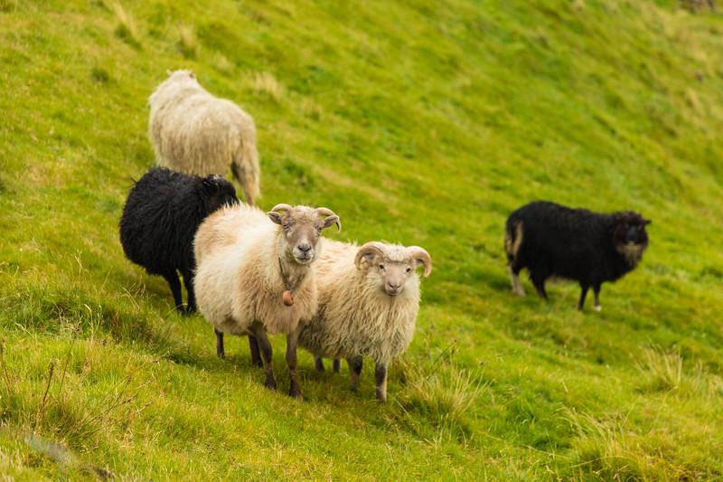 Faroes_5D4-1783.jpg