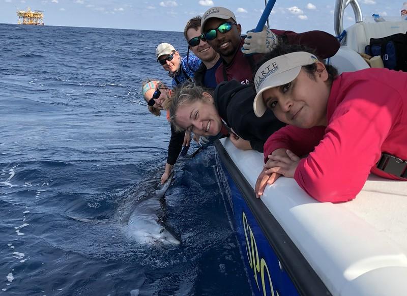 "Sportfish Center's Mako Shark ""Pico"" Surprises Scientists with 2,000-mile Migration"
