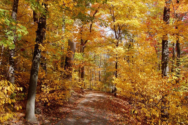 """""""Fall Beauty"""" by Chris Scheffler Digital Photography Class"""