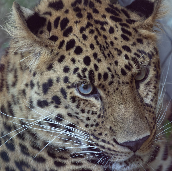 Pittsburgh Zoo-7154.jpg