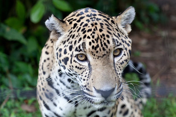 Belize Zoo - Central America