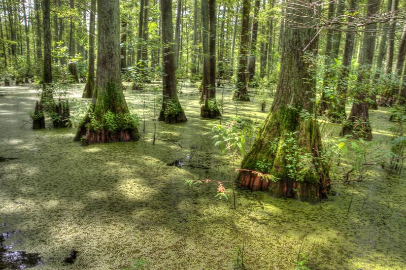 Southern Illinois Cypress SwampDSC_8220_1_2_tonemapped.jpg