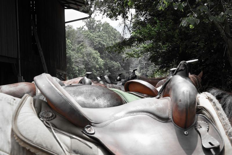 2015-07-13 Family Vacation - Davy Crocket Stables 005.jpg