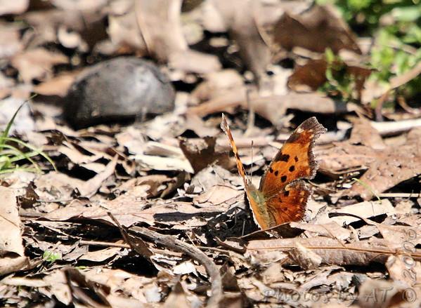 2006-04-05 Busch Wildlife Conservation Area