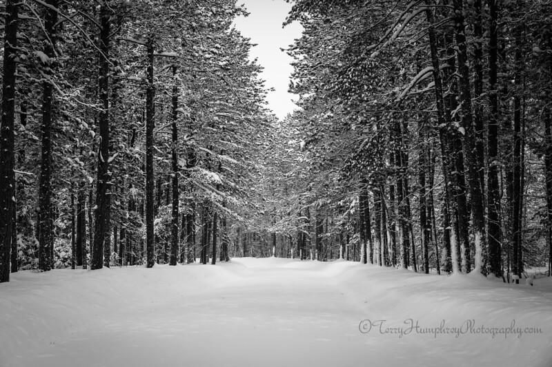 Winter Road jan27-5-Edit-Edit.jpg