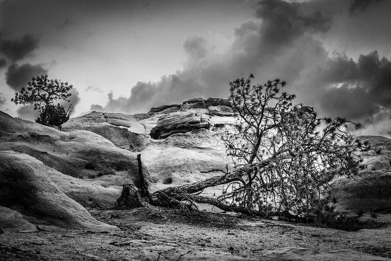 BW Fallen Tree.jpg