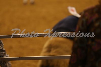Steer Wrestling Tuesday