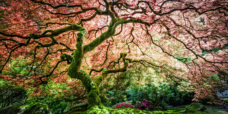 japanese Garden April 2016-31-Edit-Edit-Edit.jpg