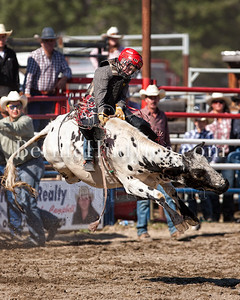 Junior Steer Riding-Barriere 2011