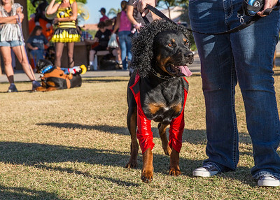 Halloween Rottie Walk Oct 27, 2013