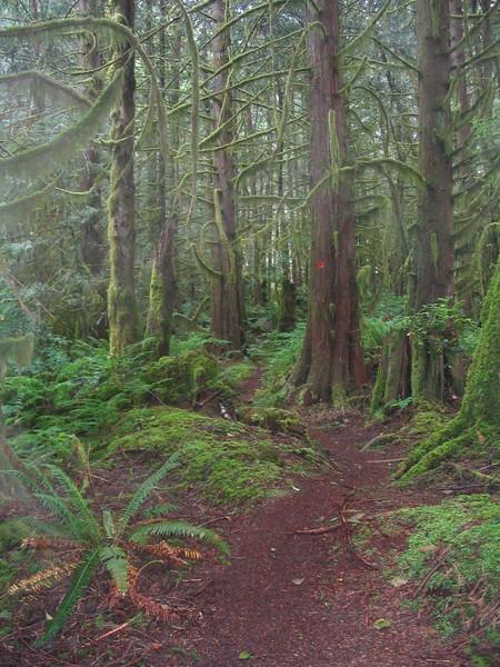 A lush biking trail on Vancouver's North Shore