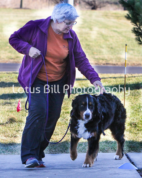 Bernese Mountain Dog 1 Saturday