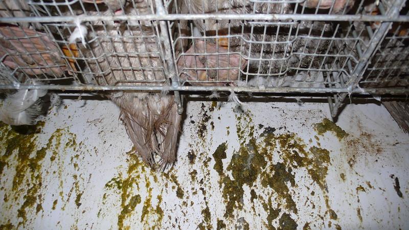 canards-foie-gras-2008-fr-B-067.jpg