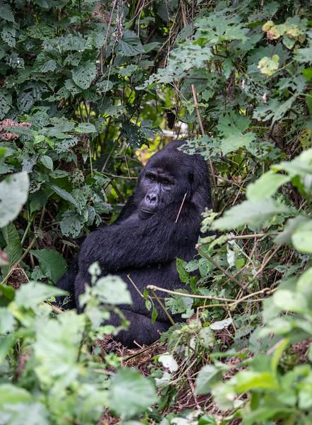 Uganda_T_Gor-1397.jpg