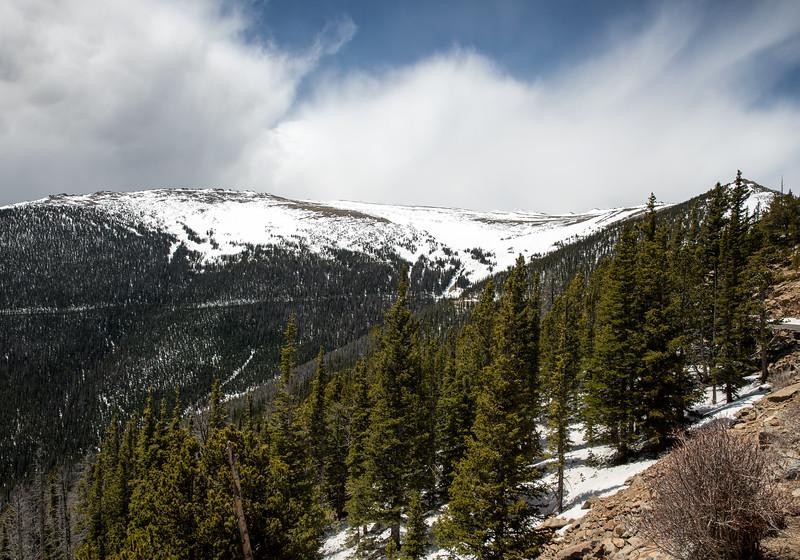 Rocky Mountain national Park Evergreens.jpg