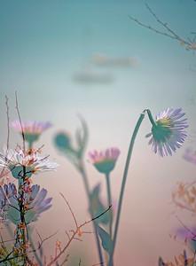 Floral Sea - Exhibition Images