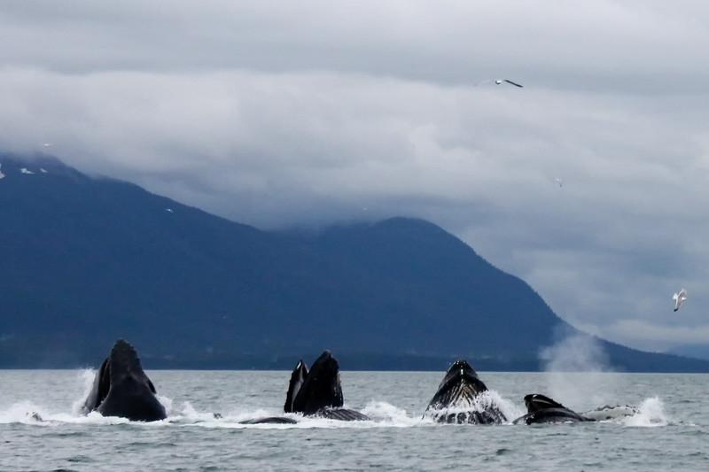 Alaska 2009-258.jpg