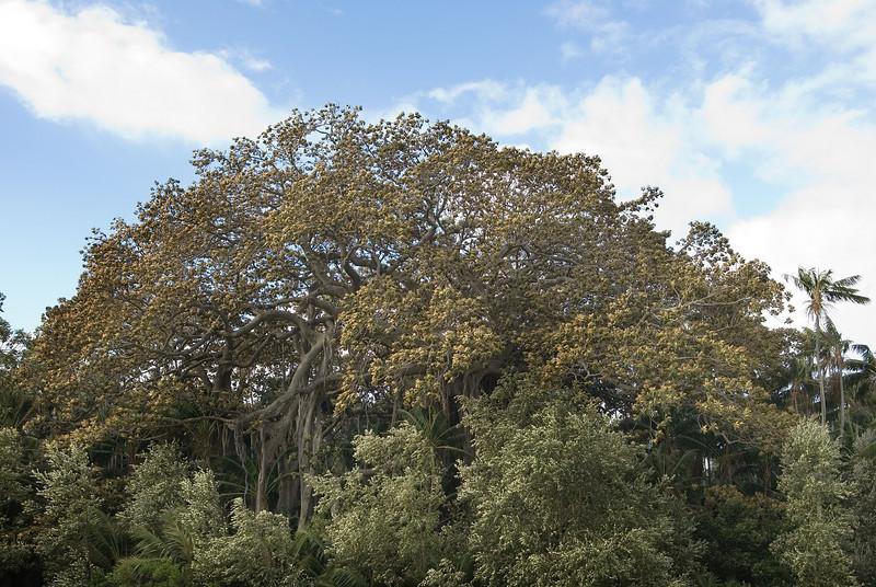 Lord Howe20080508 142806.jpg