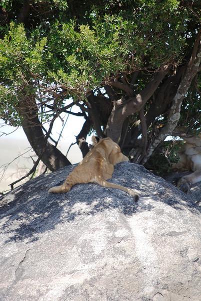 Serengeti (185).JPG