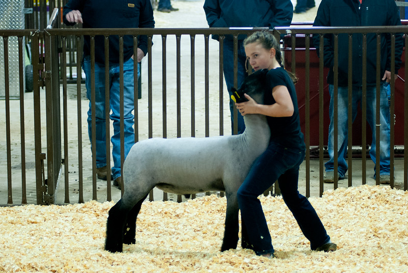 kay_county_showdown_sheep_20191207-70.jpg
