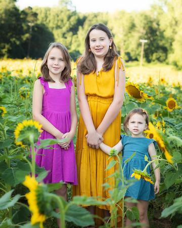 Armocida Sunflowers 2020