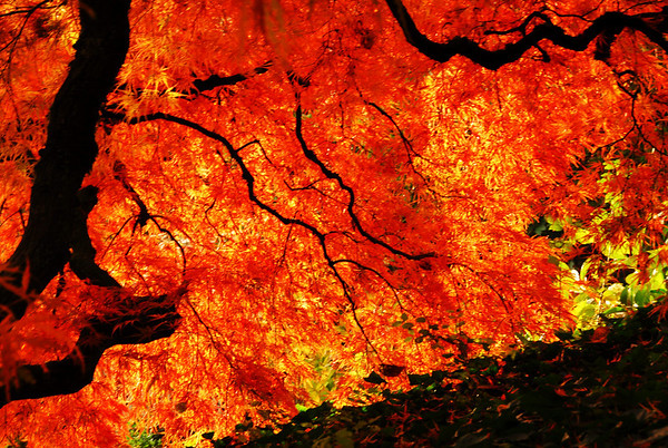 Fall Colors, 2009