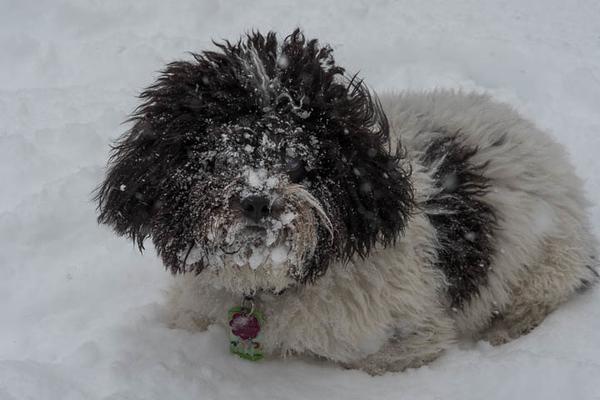 2017-Week 03 - Max Resting in the Snow.jpg