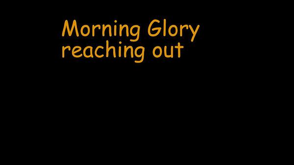 Morning glory 2