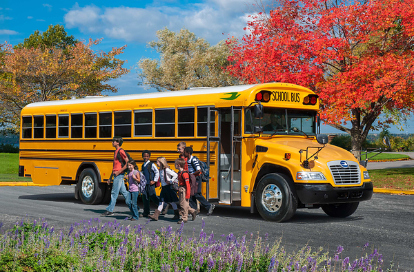 School & Commercial Buses