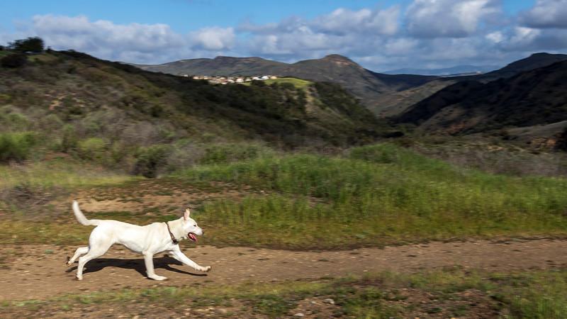 spring with dog-4030.jpg