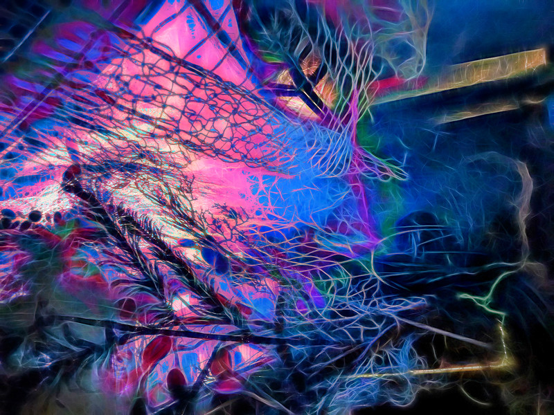 Blazing Swan 2017-Abstract #2