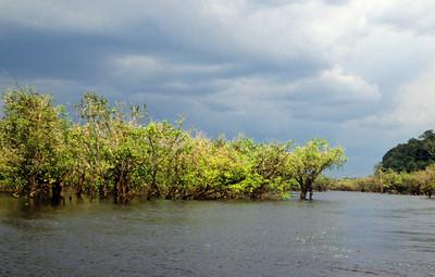 Amazone noord
