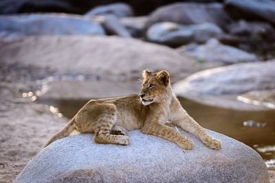 Leopard Hills 2013