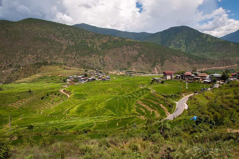 Bhutan-Punakha-8130.jpg