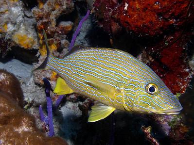 Tori's Reef - 7/13/08