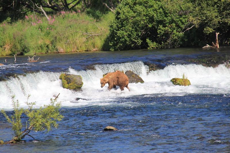 20160713-145 - Katmai NP-Brooks Camp-Another Bear at Brooks Falls.JPG