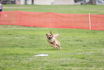 Lure Coursing - 18 Aug 2018
