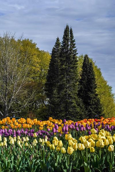 Arboretum nw1-10.JPG