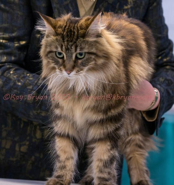 CatShow2014157.jpg